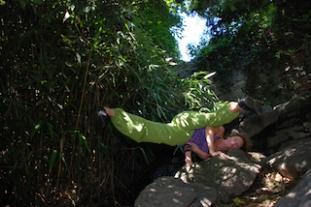 Plum Dragoness-Yoga & the Poet-tree of Motion